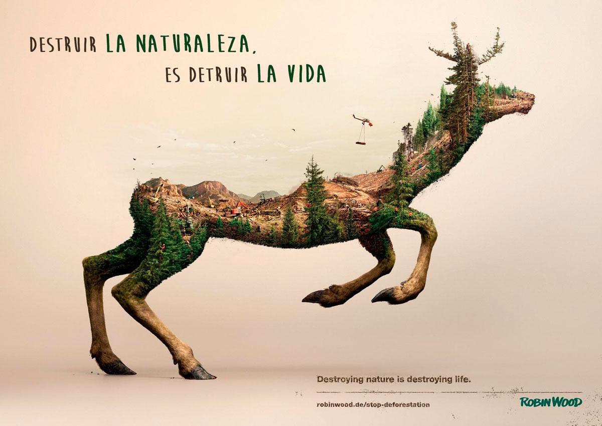 3 increíbles proyectos de reforestación + 12 tips para salvar árboles